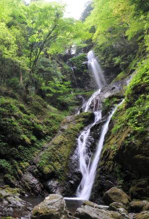 森の中に流れる雨乞いの滝の写真